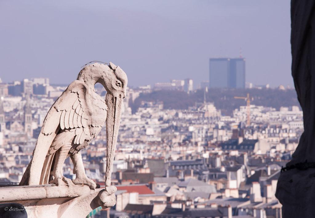 photos-paris-cathedrale-notre-dame-2013-9.jpg