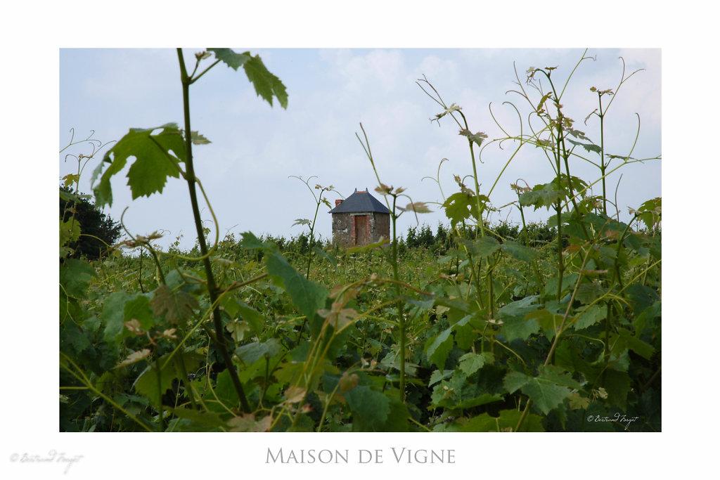Maison de vignes à Chalonnes sur loire